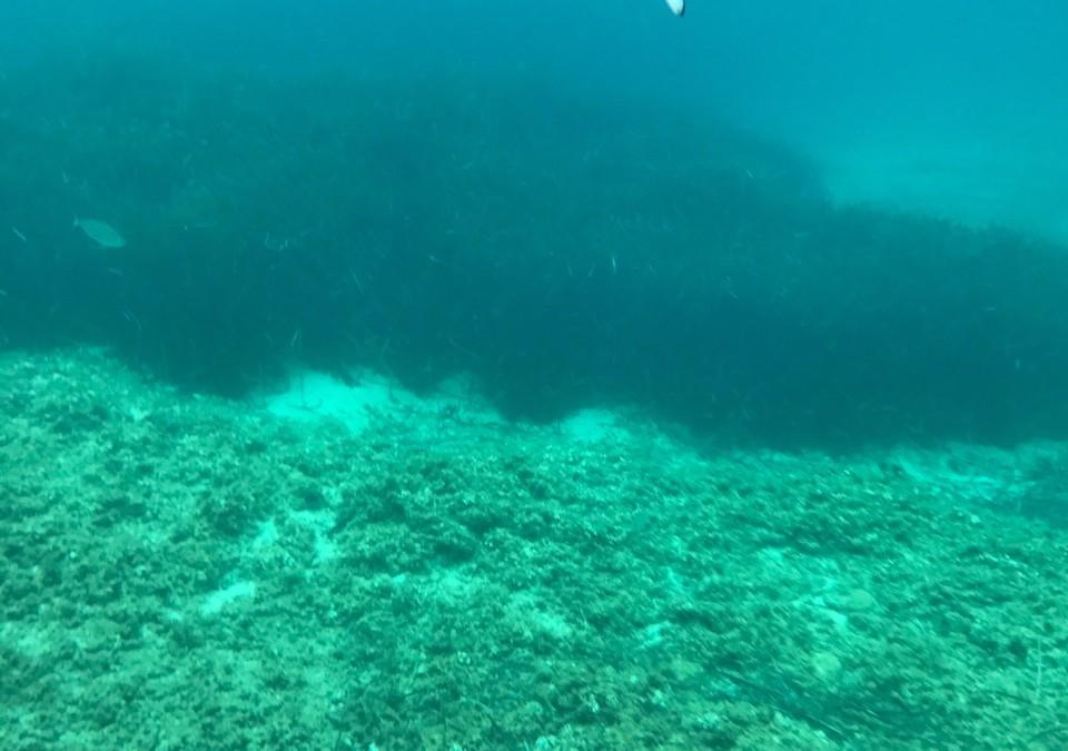 Requin à Port Pin – La vidéo