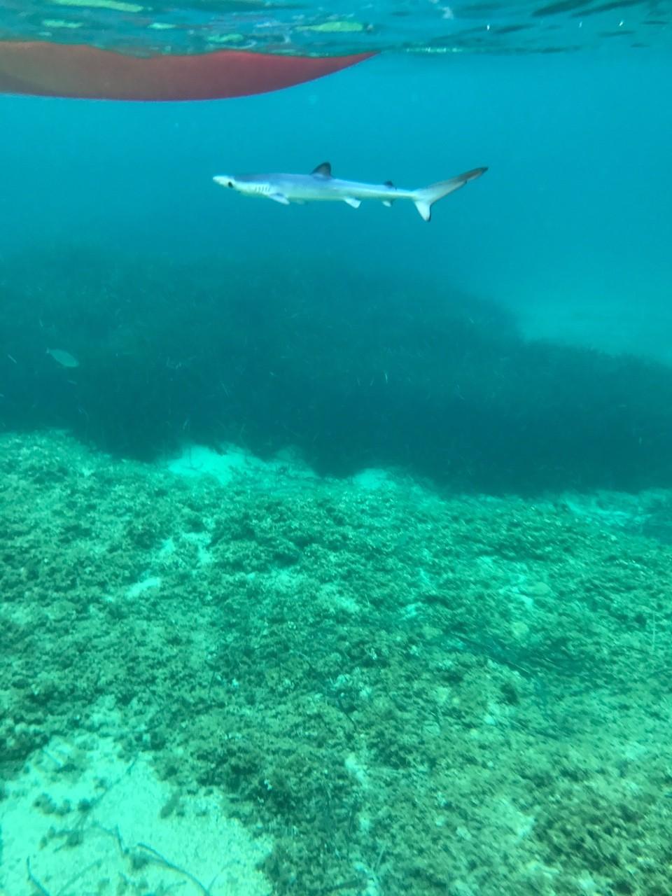 Bébé requin à Port Pin